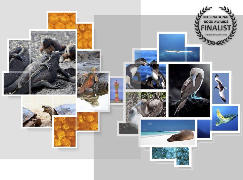 BL4-collage_no-background_w-award-1-scaled.jpg